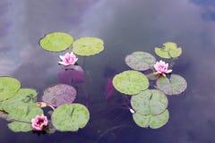 ¼ de l'eau Ô ily Photos stock