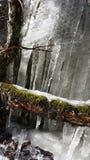 De l'hiver à la source Images stock