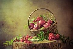 De la cesta de las manzanas del serbal todavía de la puesta del sol una vida completa Fotos de archivo libres de regalías