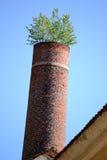 De la cheminée d'usine élevez les arbres Images libres de droits