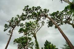 De la Florida jardín de la planta largo Imagenes de archivo