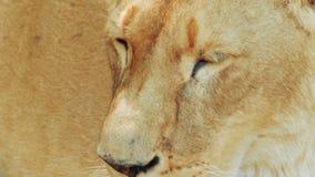De la leona primer ultra metrajes