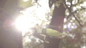 De la luz del sol árboles sin embargo almacen de video