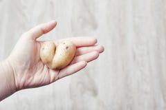 De la nature avec amour Pomme de terre dans la forme du coeur Photos stock