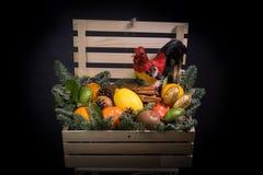 De la Noche Vieja la caja de regalo con el gallo del fuego Fotos de archivo libres de regalías