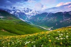 De la pelouse avec des fleurs ouvre une vue panoramique photo stock