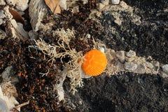 De la playa todavía de la línea de la playa vida Fotografía de archivo