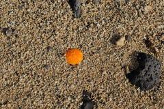 De la playa todavía de la línea de la playa vida Imágenes de archivo libres de regalías