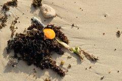 De la playa todavía de la línea de la playa vida Imagen de archivo libre de regalías