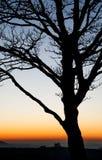 De la puesta del sol árboles sin embargo en las colinas de Chiltern Fotografía de archivo