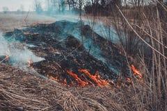De la quema de la hierba seca, se matan los insectos, los erizos, y los conejos imagen de archivo