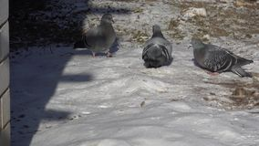 De la vie des oiseaux banque de vidéos