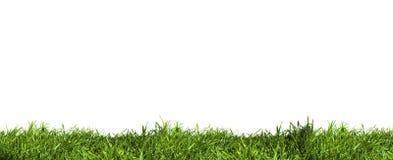 De Laag van het gras Stock Foto's