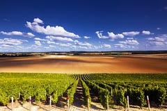 De laag van wijngaarden Stock Foto