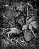 De Laarzen van de wildernis Royalty-vrije Stock Afbeeldingen