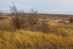 De laatste dagen in de Tavrian-steppe royalty-vrije stock foto's