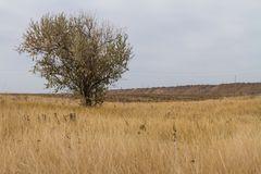 De laatste dagen in de Tavrian-steppe stock fotografie
