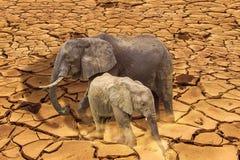 De laatste het overleven olifanten op gebarsten aarde Stock Foto's