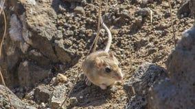 De laatste ogenblikken van een muis royalty-vrije stock foto