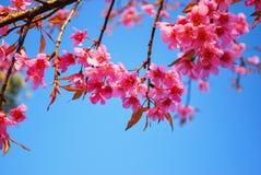 De Laatste Zoete Roze Bloemen met Blauwe Hemel vóór de Winter beëindigt Stock Fotografie
