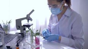 De laboratoriumarbeider voert biologische studie met installaties in reageerbuis uit en onderzoekt hen dan onder Microscoop stock footage