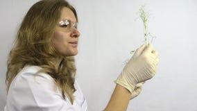 De laboratoriumvrouw onderzoekt flessen met genetisch gewijzigde installaties stock videobeelden