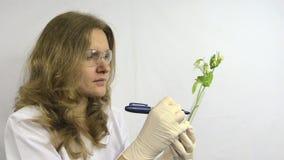 De laboratoriumvrouw schrijft aantallen op fles genetisch gewijzigd erwteninstallatie stock footage