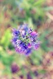 De lach van de aarde in bloem Stock Afbeelding