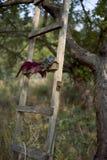 De ladder in de tuin Stock Afbeeldingen