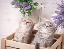 In de lade zitten en katjes die omhoog eruit zien Stock Foto's