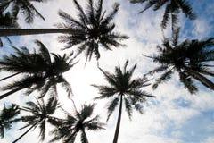 De lage hoek van palmen Stock Afbeeldingen