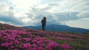 De lage hoekmening van een jonge vrouw die in sportuitrusting met rugzak alleen in de bergen wandelen behandelde met het tot bloe stock video