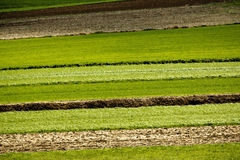 De lagen van de landbouw - gebieden en weiden Stock Foto
