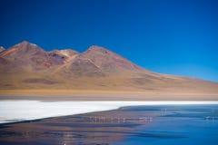 ` De Laguna Honda de `, un lac de sel congelé avec des flamants sur le chemin au sel célèbre d'Uyuni plat, destination de voyage  Photo stock