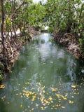 De lagune van Florida stock foto's