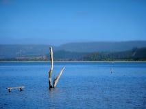 De Lagune van Knysna Stock Foto