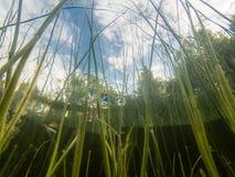 De Lakeshorebies stamt laag hoek onderwaterschot stock fotografie