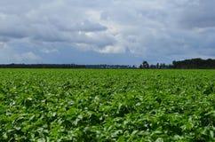 De landbouw Royalty-vrije Stock Afbeelding