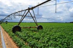 De landbouw Stock Foto's