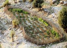 De landbouw Stock Afbeelding