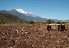 De landbouw stock foto