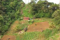 De landbouw aan de windwaartse kant van een Caraïbisch eiland Stock Fotografie