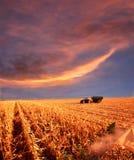 De landbouw bij zonsondergang Royalty-vrije Stock Afbeeldingen