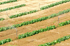 De landbouw irrigeert systeem. stock afbeelding