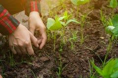De landbouw leidt moestuin stock afbeelding
