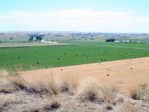De landbouw in Montana Stock Foto
