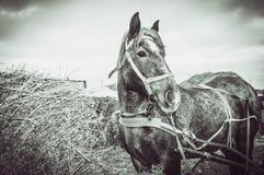 de landbouw… In Petrikovka! Royalty-vrije Stock Foto's