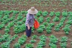 De landbouw van 3 stock afbeeldingen