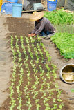 De Landbouw van de landbouwer royalty-vrije stock afbeelding