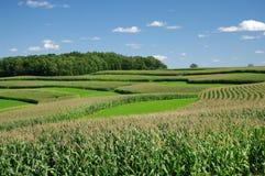 De Landbouw van de Strook van de contour Stock Afbeelding